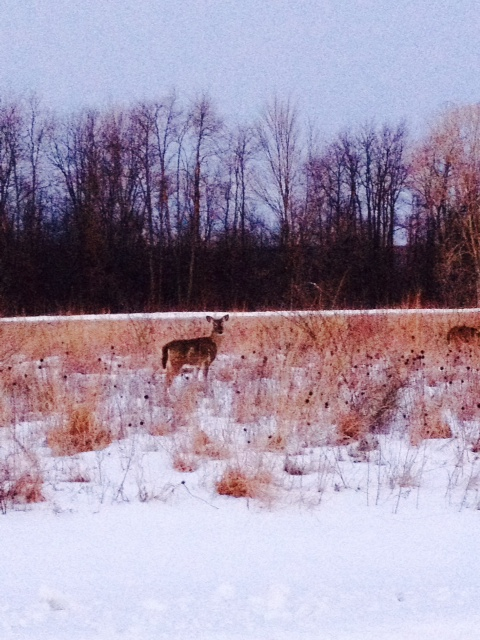 Runners often are joined by deer at this park.