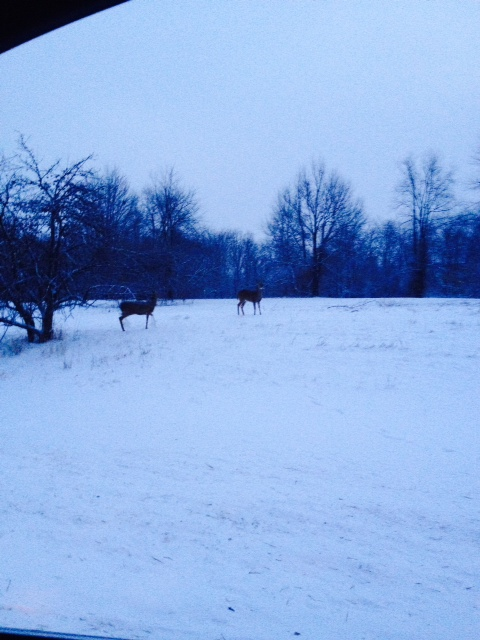 Wintry view at Stony Creek Metropark.