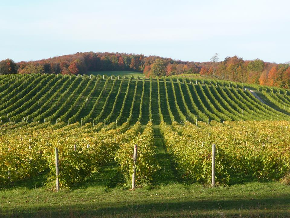 Expect scenic views of vineyards, orchards and West Grand Traverse Bay.