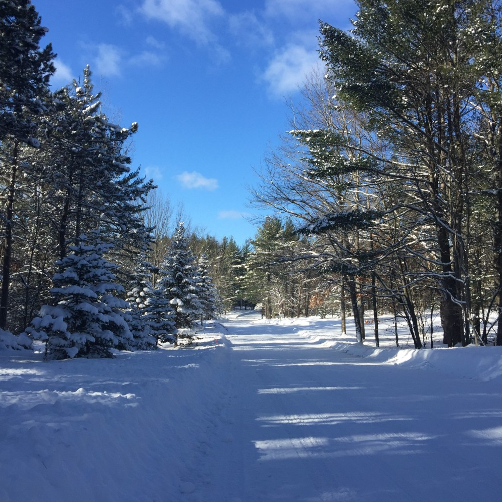 Winter is here!  Taken during my midday run, Jan. 4, 2016.
