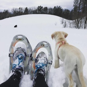Heather recently took Ellie, her family's yellow lab puppy, on a snowshoe run on neighborhood trails. Dogs can make awesome running partners.